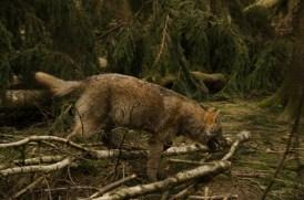 Wolfsrudel-14