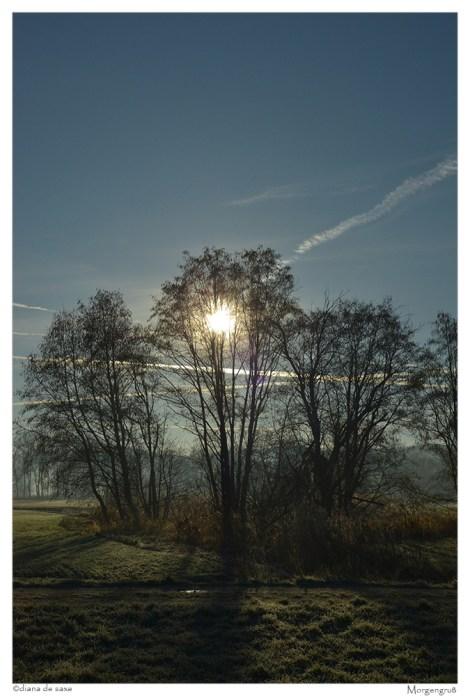 800_Morgengruß