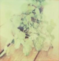 Polaroid Col 12