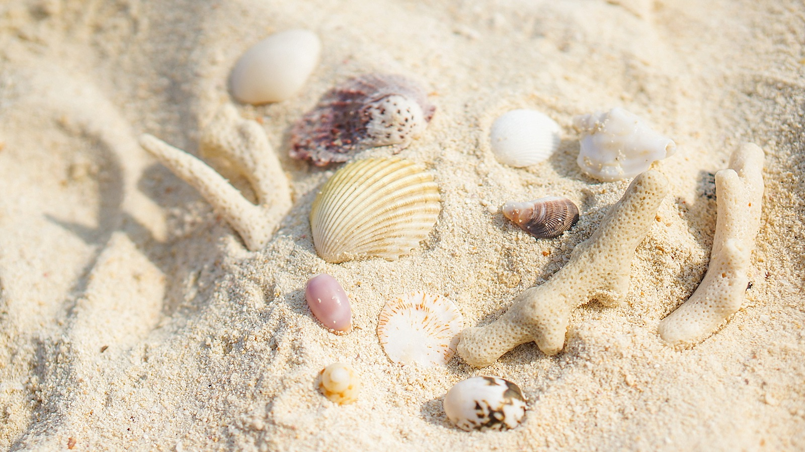 seashells in the sand collected from Thailand Bamboo Beach Phi Phi Islands