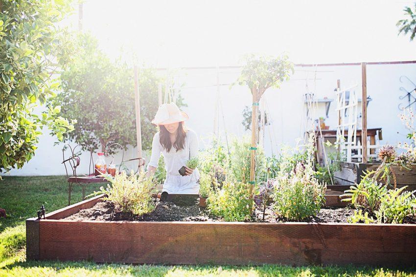 How to start a garden + build garden beds