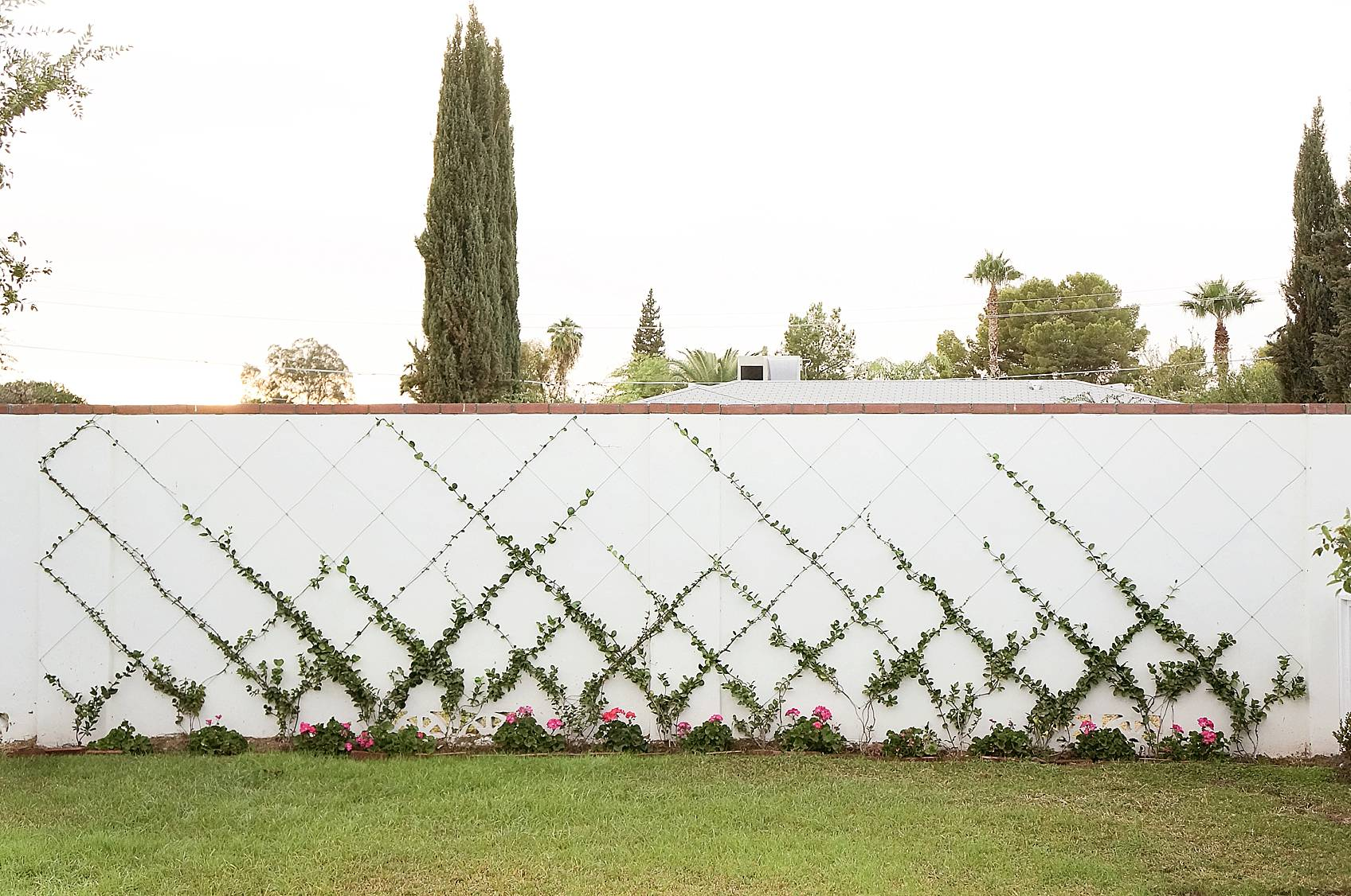 white cinderblock wall with small jasmine training into a trellis diamond pattern