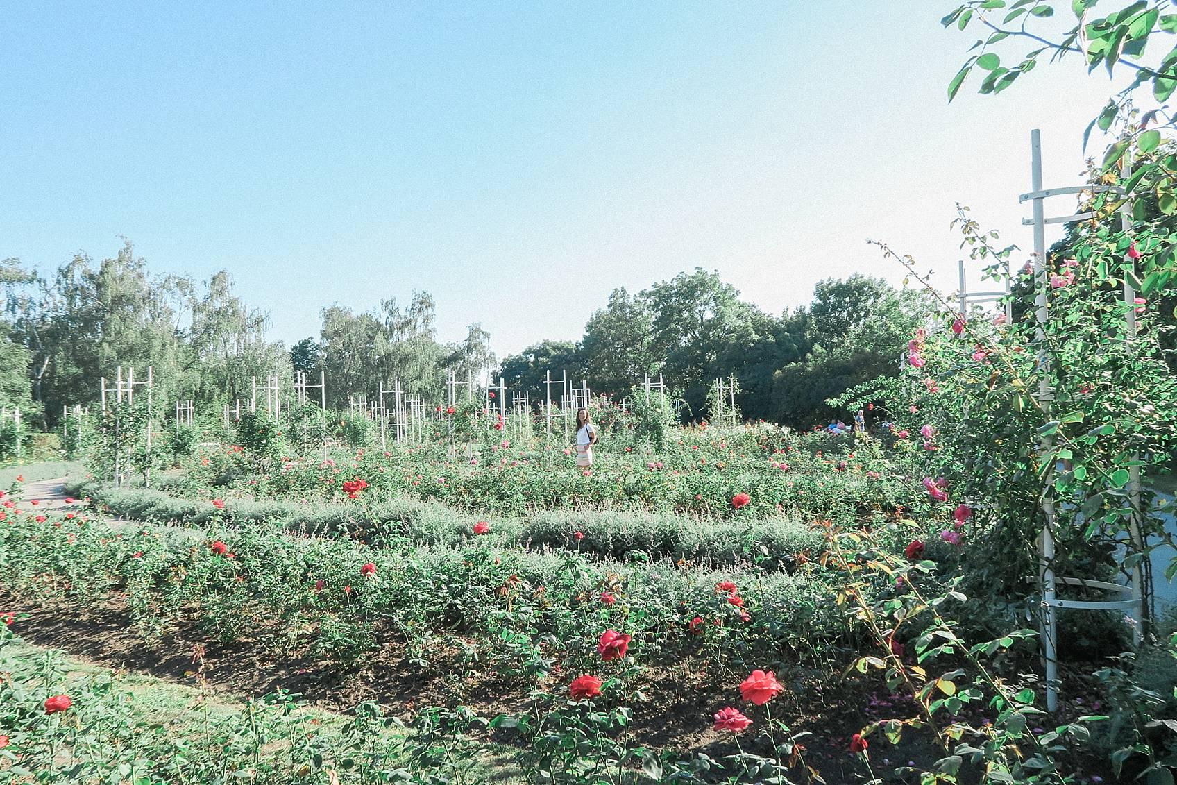 photo guide to Prague: rose garden at top of Prague, Czech Republic