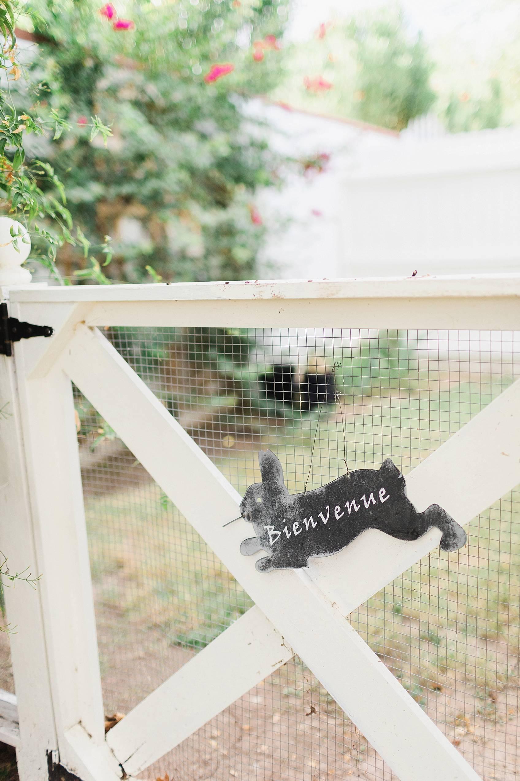 bunny on side gate in backyard