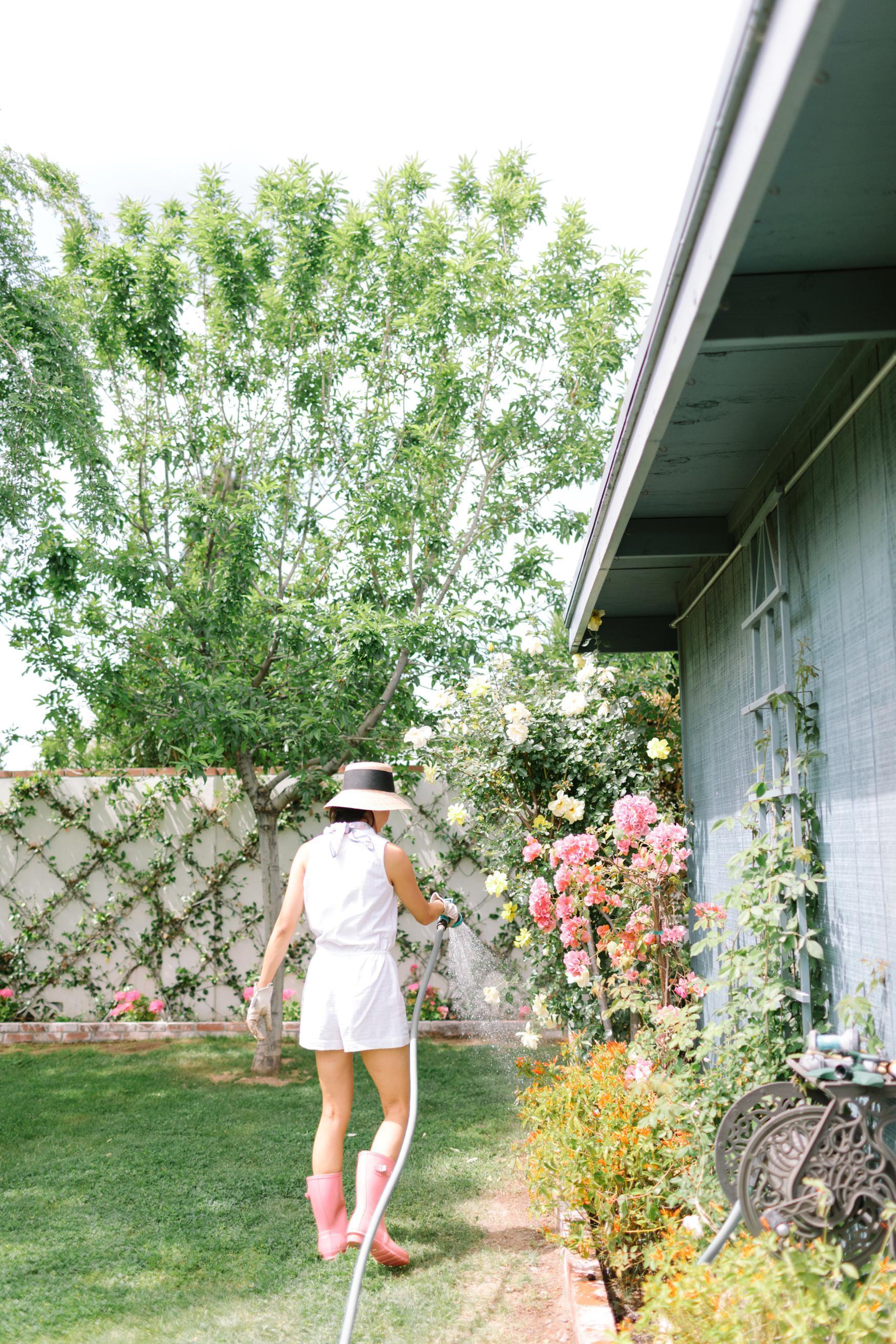 Into the backyard garden jasmine wall espalier vine with Fiskars Gilmour tools