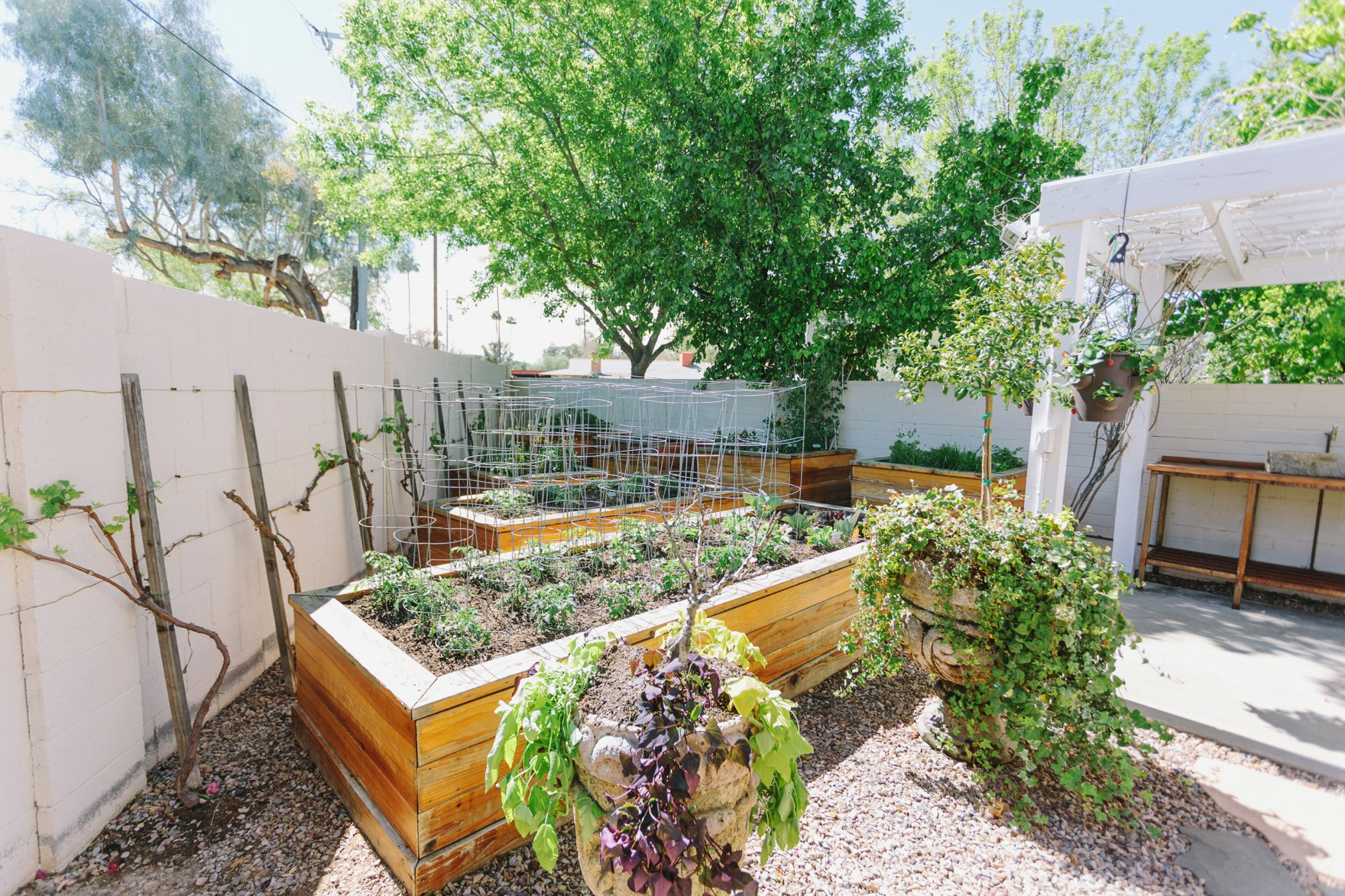 Central Phoenix arizona house tour To Have to Host Lory Parson backyard garden