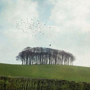 Cornwall-Trees - Diana Jane Art