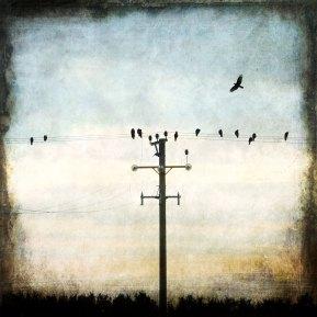 The Crows - Sundown - Diana Jane Art