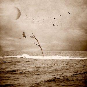 Diana Jane Art, Photography, Digital Art, Covid 19, 2020