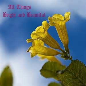 all things bright and beautiful2