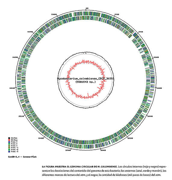 Así es el genoma de bacteria oportunista en el VIH Sida (1/2)