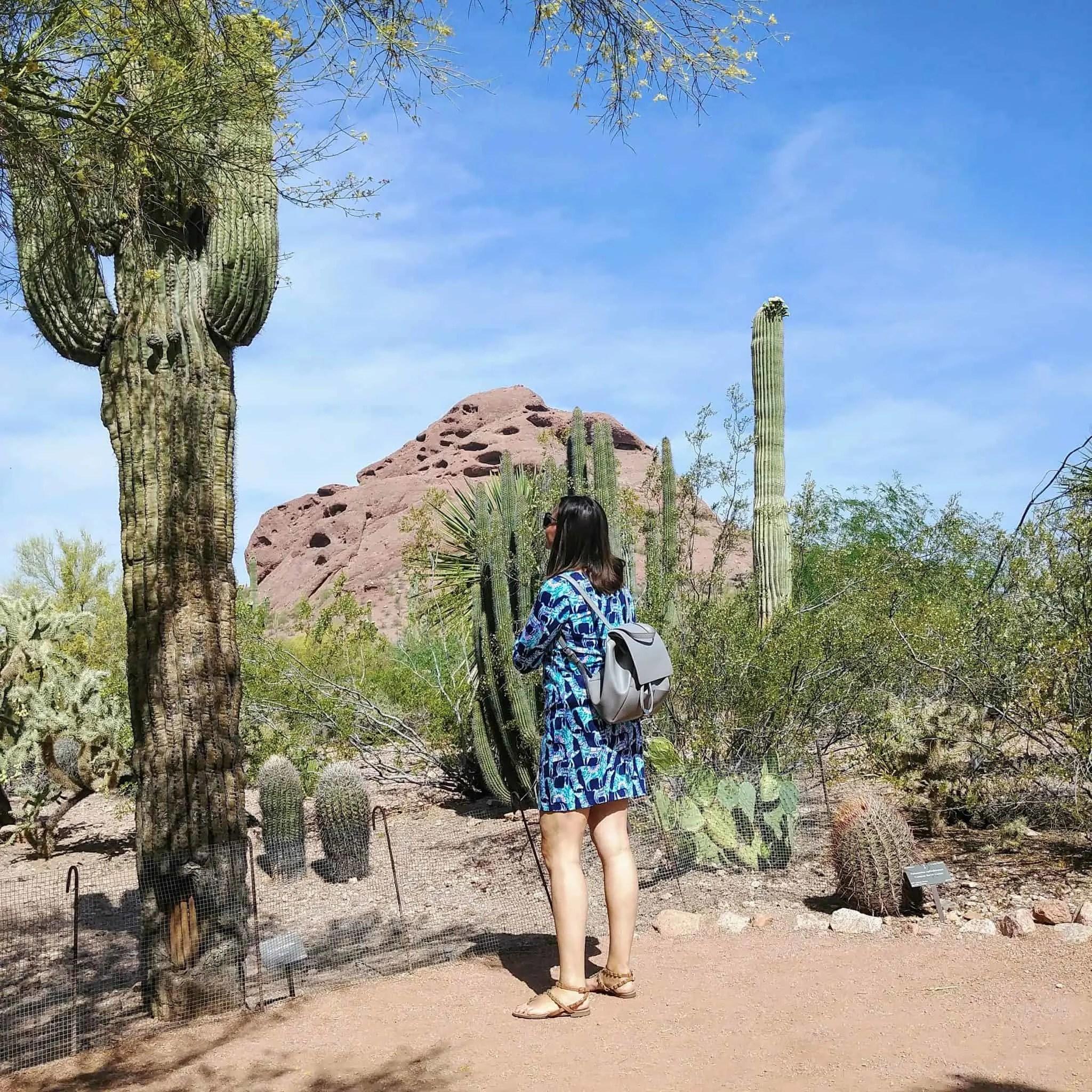 Botanical Gardens Arizona butte cactus mountain views