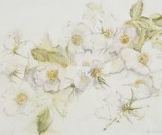 Drawing of Wild Roses