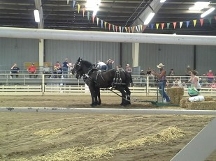 I had no idea how graceful and limber draft horses can be until I saw the draft horse competition.