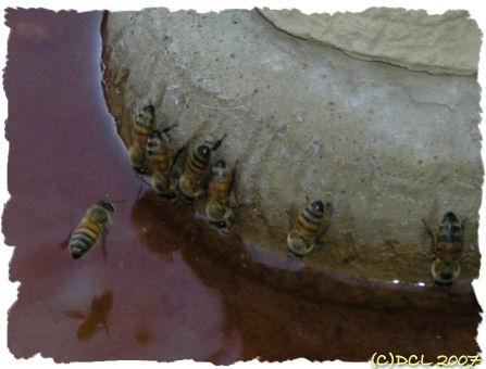 Törstiga bin och jordgubbsland (3/5)