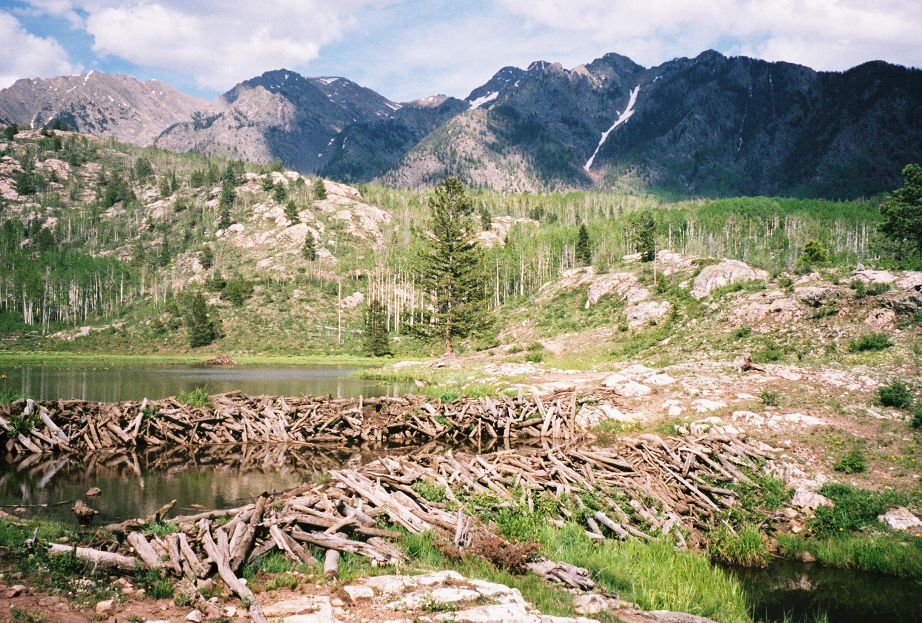 Beaver Dams at Spud Lake