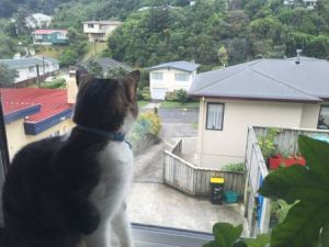 Max sitting on the window sill, looking down the driveway.