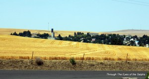 The little town of Moro, Oregon amid the trees and wheat fields as seen from our campground