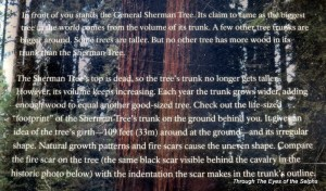 General Sherman tree is biggest by volume