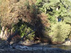 trees_on_shoreline