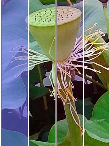 fior di loto 200 px_multicolor. con firmajpg