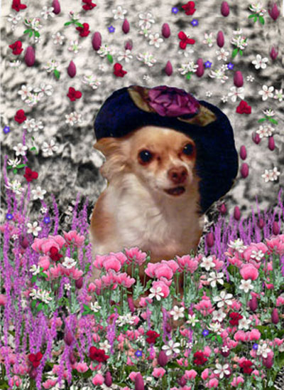 Painting (Digital Collage) - Chi Chi in Flowers - Art Card, ACEO