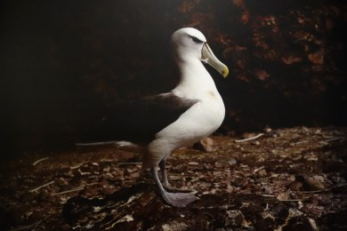 Matthew Newton The trap, On Albatross Island 2014 pigment print 100 x120 cm