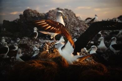 Matthew Newton Last light, On Albatross Island 2014 pigment print 100x120 cm