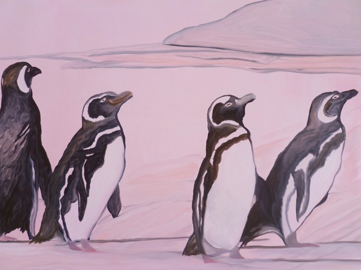 Should We Go Should Stay Saunders Island Falkland Islands 18x24