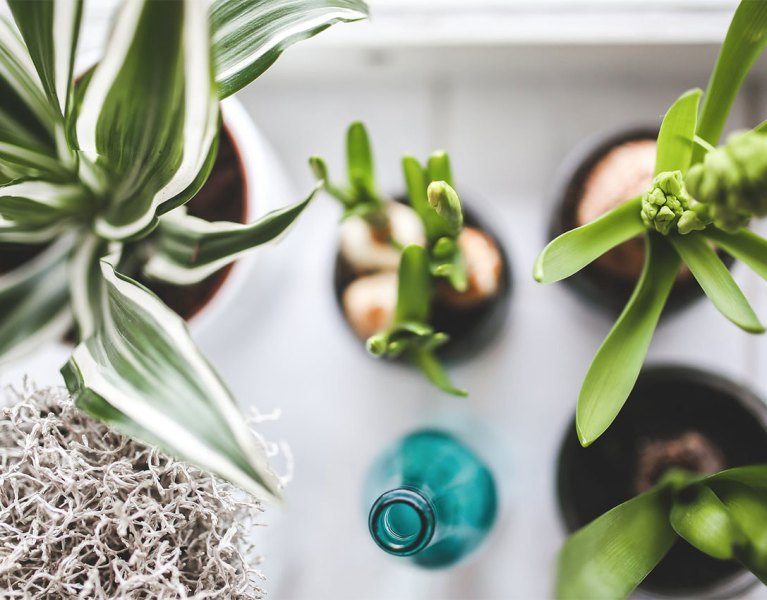 3 Essential Tips for Detoxing Your Home