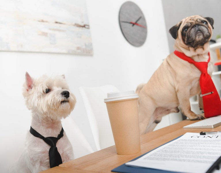 Dog-Friendly Workplace