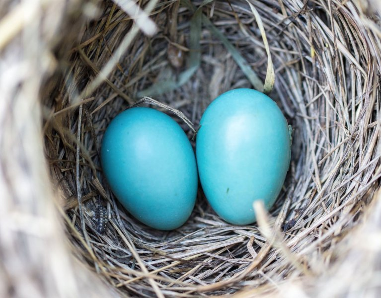Growing Your Nest Egg: Investment Ideas If You're Feeling Cash Savvy