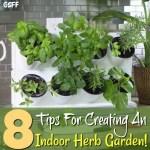 Creating An Indoor Herb Garden!