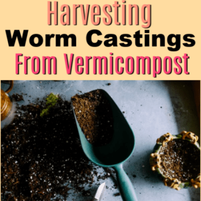How To Harvest Worm Castings From Your Vermicompost