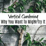 Vertical Vegetable Gardening:  Why It Might Be Right For You