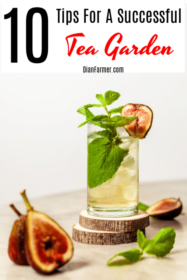 Having a garden is great, but make sure you grow what you love. Do you love tea? Why not grow a tea garden. Click through to find out how.