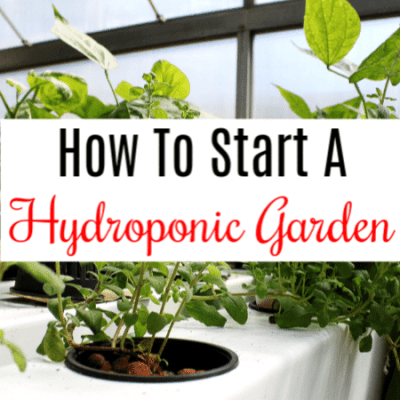 How To Start A Hydroponic Garden