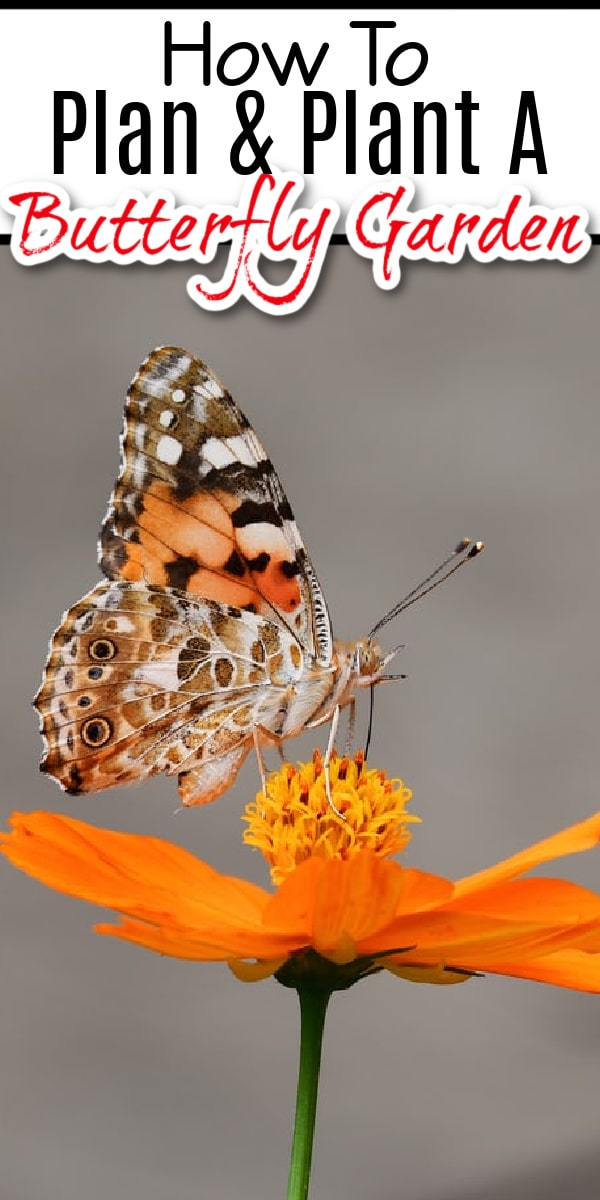 Planning & planting a butterfly garden is fun & beneficial. Click NOW to learn how to enjoy the beauty while reaping the benefits of butterflies in your garden....