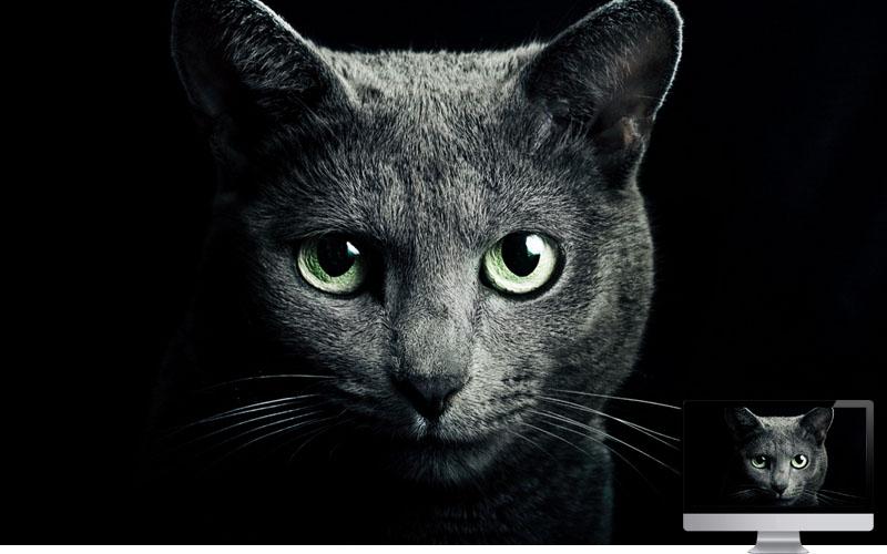 #12. Cat Black Breed Russian Blue Eyes
