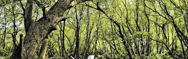 Lautan Manusia di Hutan Mangrove PIK