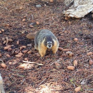A very assertive Sierra marmot tried to steal our lunch at Heather Lake, just past the far end of Lake Aloha.