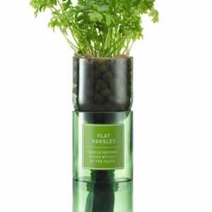 Kit d'herbes hydroponiques Persil Plat