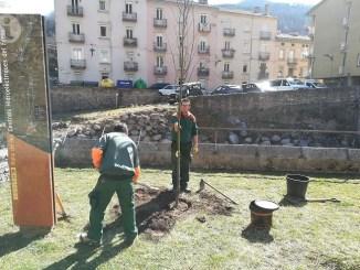 Arbre 50 anys fundacio map Ribes Freser municipi ripolles