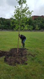 tree diana