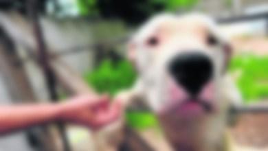 Photo of Villa Madero: Le desvalijaron la casa y le secuestraron una mascota