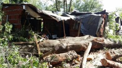 Photo of Caída de un árbol: Tres muertos