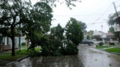 Photo of En Mar del Plata el temporal dejó más de 40 evacuados y 220 árboles caídos