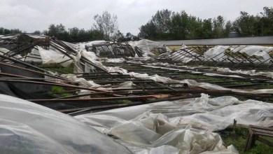 Photo of Lo que el viento se llevó y dejó