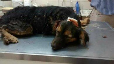 Photo of Le partió la cabeza a un perro y lo enterró vivo, ocurrió en Corrientes