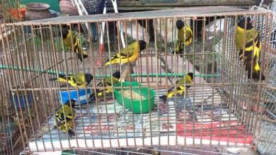 Photo of Ambiente rescató aves del tráfico de fauna
